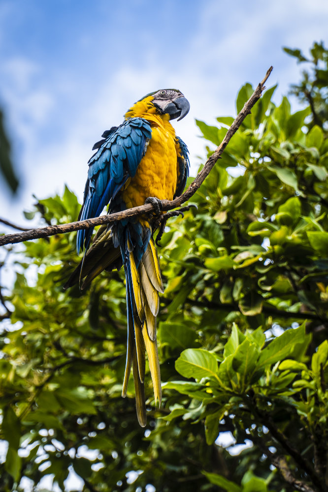 A Blue Macaw, photographed by wildlife and documentary cinematographer Leanne Gater